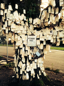 A Wishing Tree in Portland